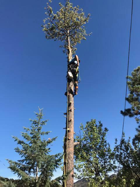 Elevate Tree Services, LLC
