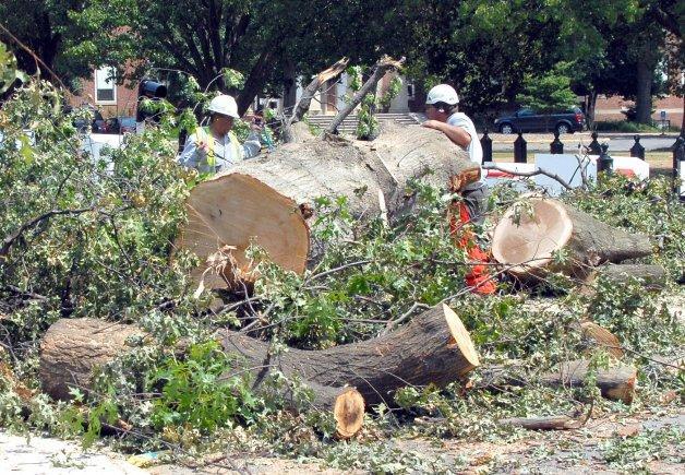 TPM Tree Service