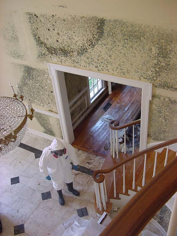 OD Construction Mold Remediation