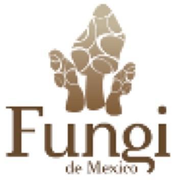 fungi de mexico