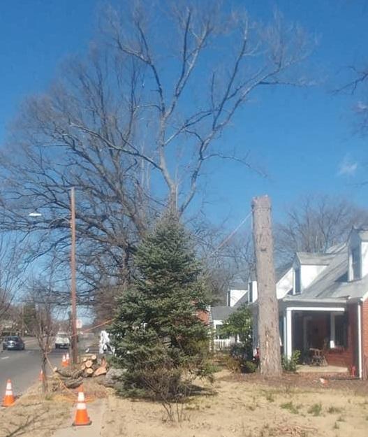 Lumberjack Tree Care
