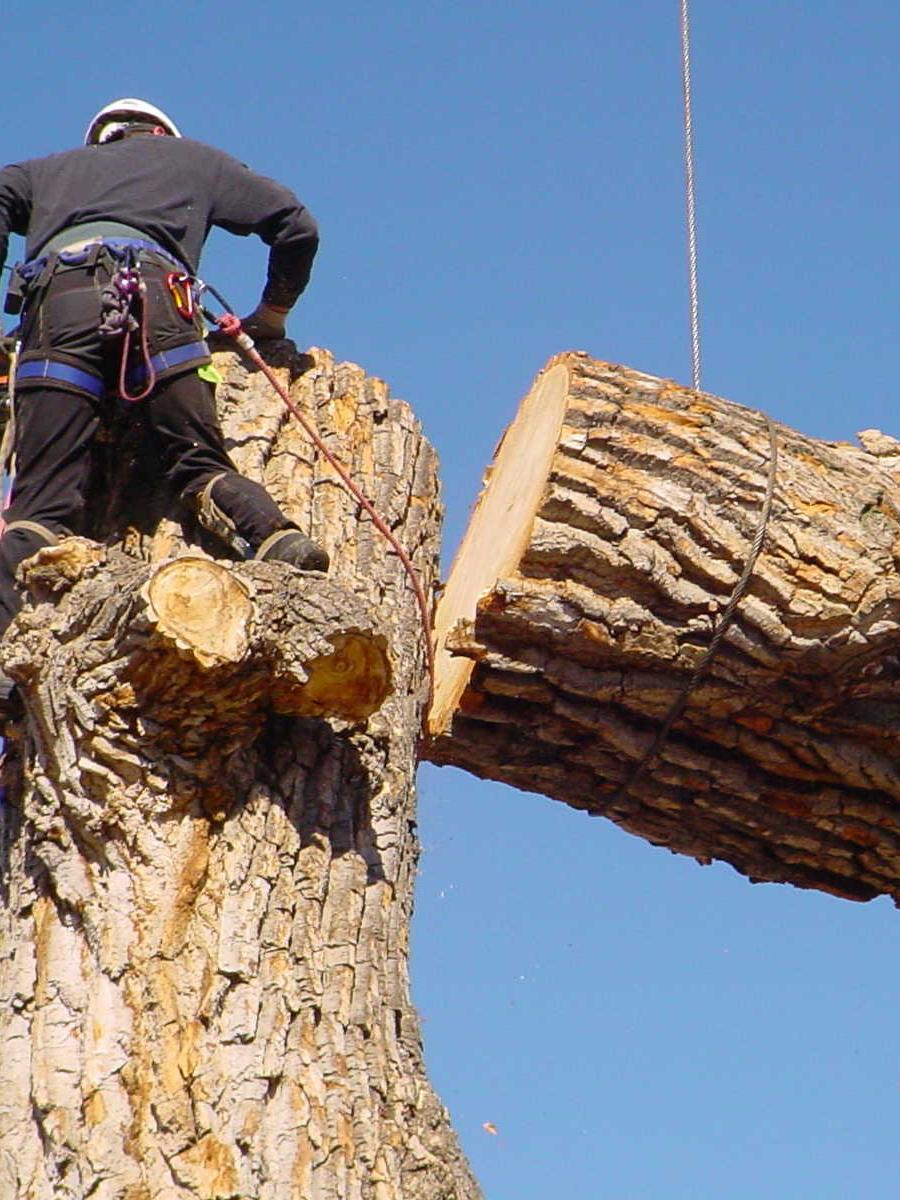 Bull Pine Tree Service and Property Maintenance