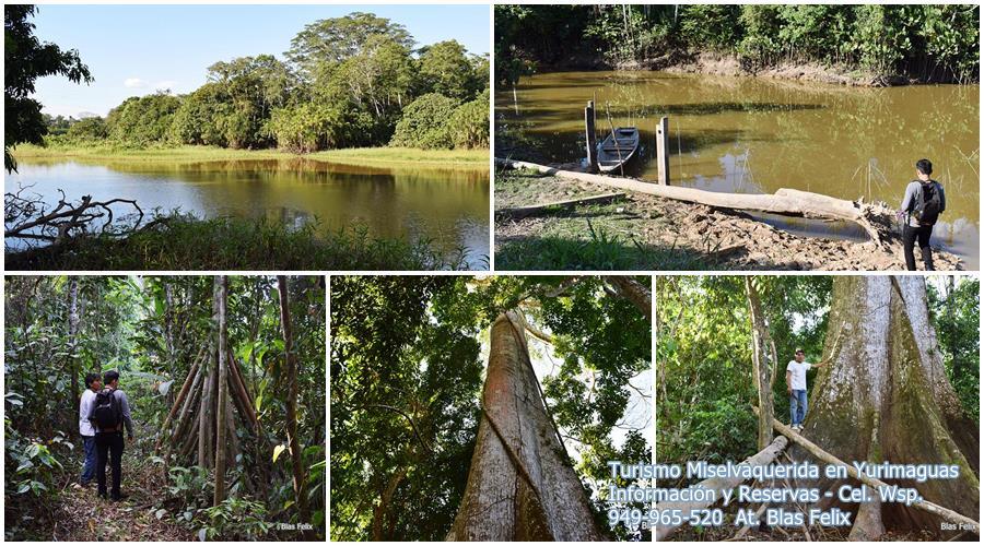 Bosque del Lago y Quebrada Chambira